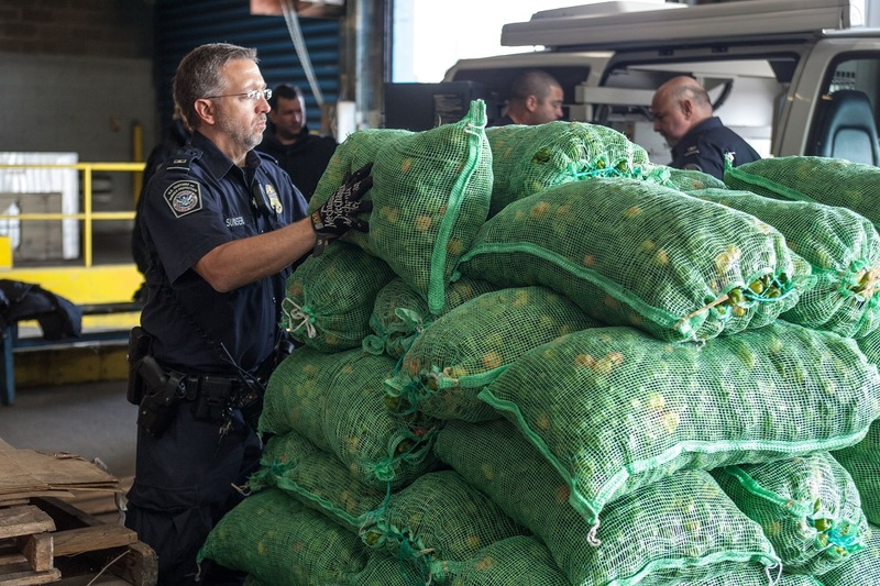 An Office of Field Operations Officer stacks bags of peppers that have gone through the mobile x-ray scanner, the peppers came off a container ship that was carrying fruits and vegetables.